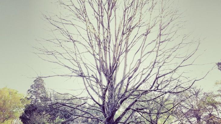 #BP Tree